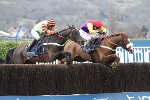 five horses dead at cheltenham festival 2018 as two more casualties join willie mullins' sandsend on gold cup day