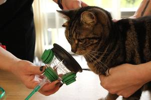 hertfordshire fire engines to carry specialist pet oxygen masks to help save animals during blazes
