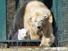 Britain's first polar bear born in 25 years pictured outdoors