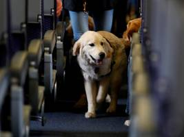 united is making a big change to its pet policy after a puppy tragically died in an overhead bin during a flight (ual)