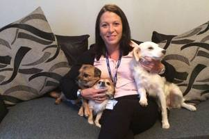 alvaston woman's terror as dog breaks out of garden to attack her pets