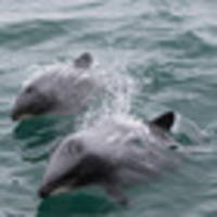 dolphin deaths prompt order to fast-track protection plan