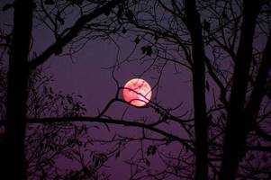 seven sky events including the pink moon and the lyrid meteor shower that you must see in april