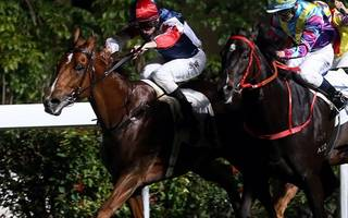 Hong Kong Betting Tips: Fast Most Furious can be Proactive and land win