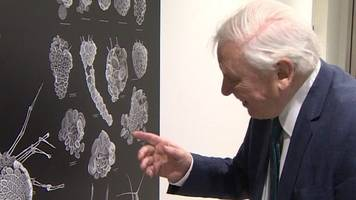 plankton named after attenborough series