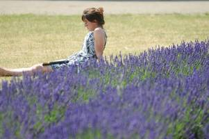 16 ways to make the most of the surrey sunshine on your lunch break