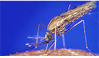Syngenta Announces a New Malaria Insecticide Entering Early Development Phase
