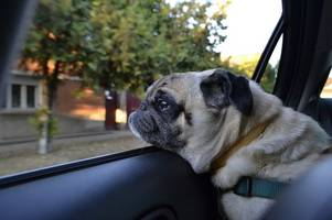 this is what to do if you see a dog trapped in a car on a hot day and how to issue emergency first aid