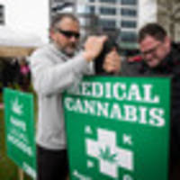 Careful what you say, submitters on medical cannabis law change told
