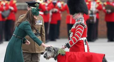 Mascot wolfhound from Northern Ireland being worked to death claim soldiers