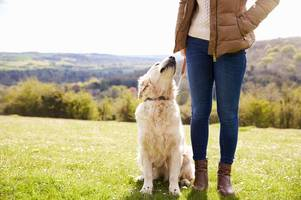 how long should you walk your dog for?