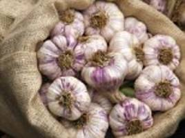 garlic can slash the risk of cancer, heart disease and type 2 diabetes, conclude scientists