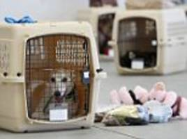 united to ban nearly 50 dog breeds from the cargo hold after a bulldog died in overhead bin