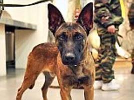 police secretly training britain's first unit of attack dogs to hunt down terrorists