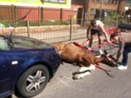 hunt for men who fled crash scene leaving a panicked horse bleeding in the road