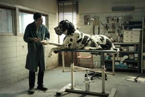 'dogman' film review: good man goes bad in muscular italian drama