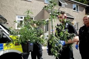 Police weed out large Cornwall cannabis factory with 300 plants