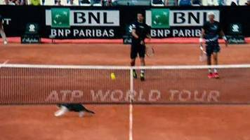 Watch: Cat invades court at Italian Open