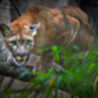Cougar shot dead after killing mountain biker