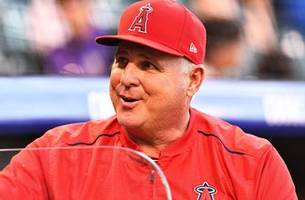 angels' mike scioscia on the verge of surpassing mentor tommy lasorda