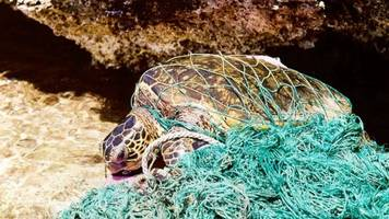 Sea Turtles Have To Deal With Plastic Threats On Two Fronts