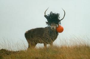 heartbreaking snap of proud stag with rope tangled in antlers reveals sad impact of litter in scotland