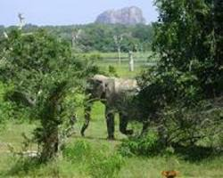 Sri Lanka elephants face plastic danger foraging dumps for food