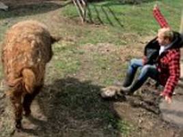 man flung into muddy puddle by massive pig