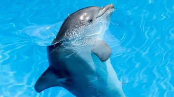 dolphin 'happiness' measured by scientists in france