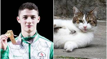 northern ireland hero rhys mcclenaghan enjoys reception with theresa may and larry the downing street cat
