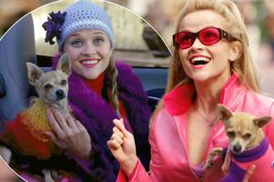 reese witherspoon confirms legally blonde 3 with elle woods tribute