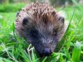 one in five british mammal species could be extinct in a decade