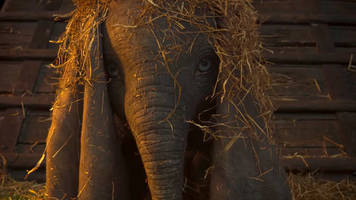 Disney's first live-action Dumbo trailer is pure Tim Burton melancholy