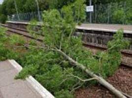 storm hector brings down trees and sparks rush hour travel disruption