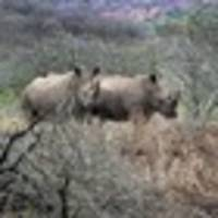 South Africa: How seeing rhinos may help save them