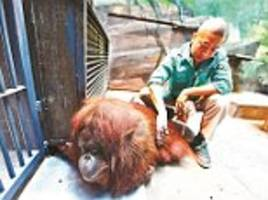 Beijing Zoo gives disabled orangutan traditional Chinese massage