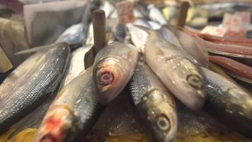 Hong Kong's fish are eating plastic - and people could be too
