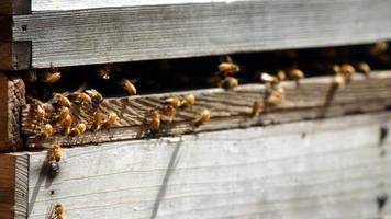 appeal after beehives destroyed by fire in alves