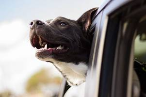 health warning for dog owners with 4x4s and suv cars
