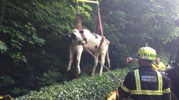 animal rescues cost fire service £350k