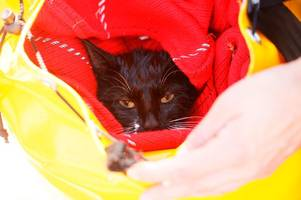 drowning cat clinging to branch in river soar in leicester rescued by fire service