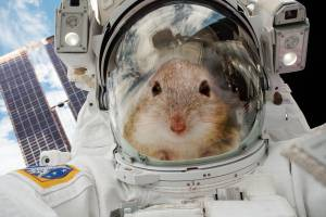 the digest: 20 mice are going to space to help us figure out how to survive on mars