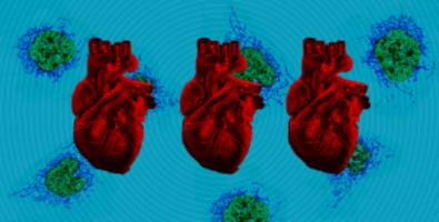 The Digest: Doctors Repair Infants' Damaged Hearts With Experimental Procedure#source%3Dgooglier%2Ecom#https%3A%2F%2Fgooglier%2Ecom%2Fpage%2F%2F10000