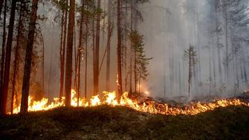 sweden battles wildfires from arctic circle to baltic sea