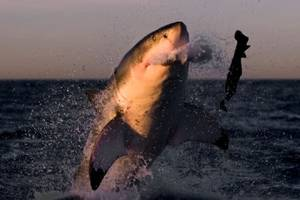 shark week has earned discovery $36 million in ad revenue over last 2 years