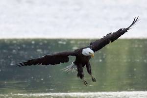 the trump administration is rolling back parts of the endangered species act