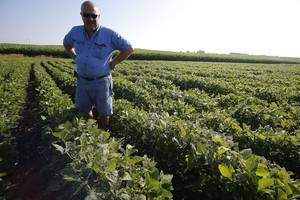 china is using a cartoon soybean to win over the public in the us-china trade war