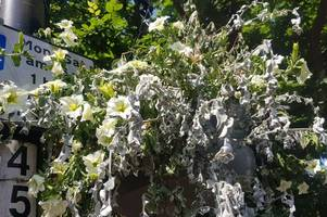 'dying flowers and gloomy' - what residents are saying about sutton coldfield's britain in bloom entry