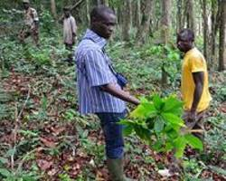 Cameroon's anglophone crisis hits palm oil, cocoa production