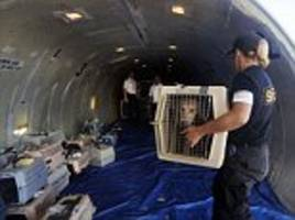 terrified dog forces emergency landing in moscow after 'opening the luggage hatch'